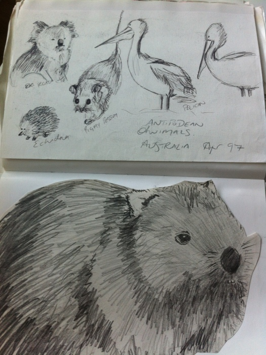 Australian animals from my Australia sketchbook