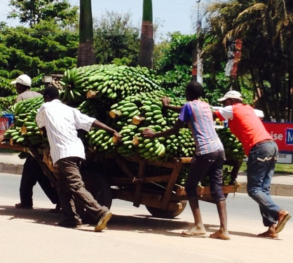 Handcart full of bananas being pushed round the Clock Tower roundabout on Makongoro Road, Mwanza.