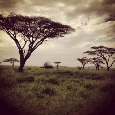 Serengeti National Park Landscape