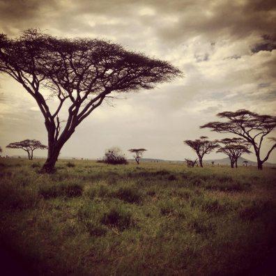 Serengeti National Park Landscape