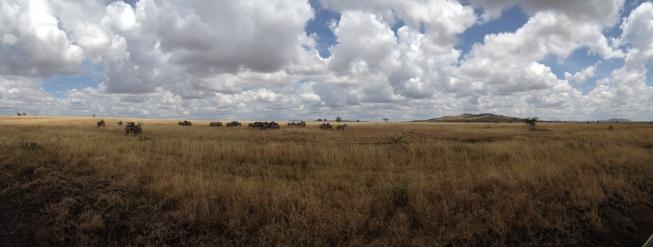 Serengeti Panorama