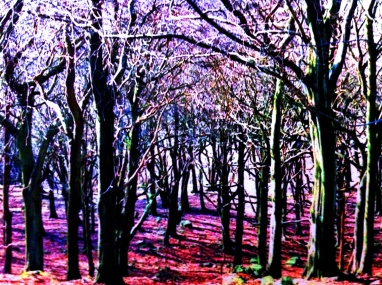 The woods above Hebden Bridge, England.