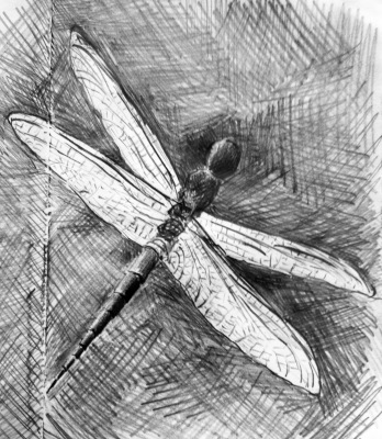 Sketch of a dragonfly in our garden in Mwanza, Tanzania