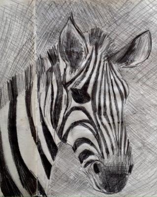 Sketch of a zebra the Serengeti, Tanzania