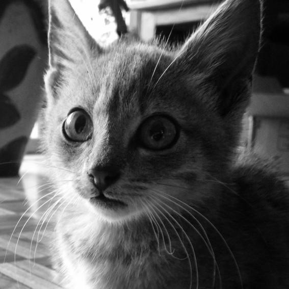 Modraniht, our new kitten,