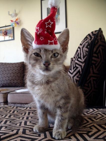 Our little Christmas kitten - Modraniht